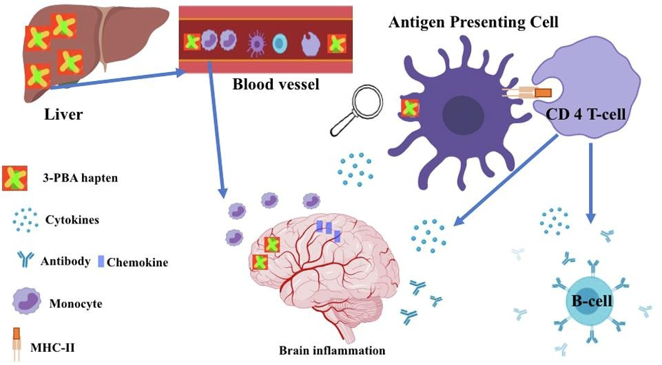 immune response diagram